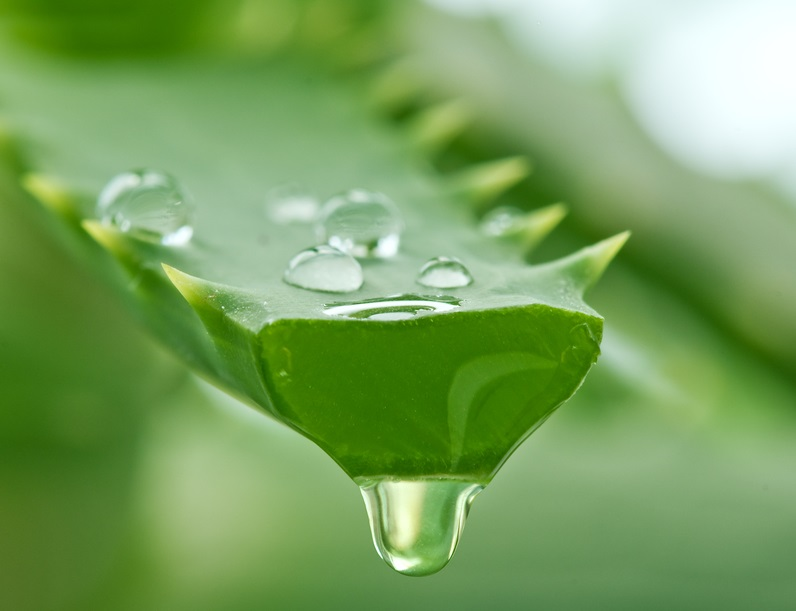 aloe vera for thick eyebrows